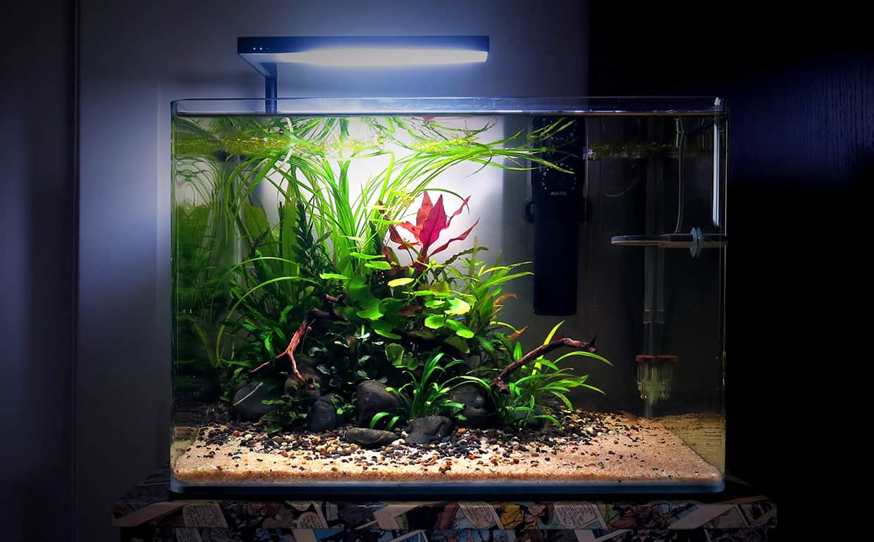 Aquascape jungle