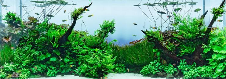 Biotopo acquario
