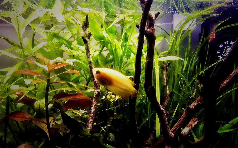 Pesci tropicali piccoli