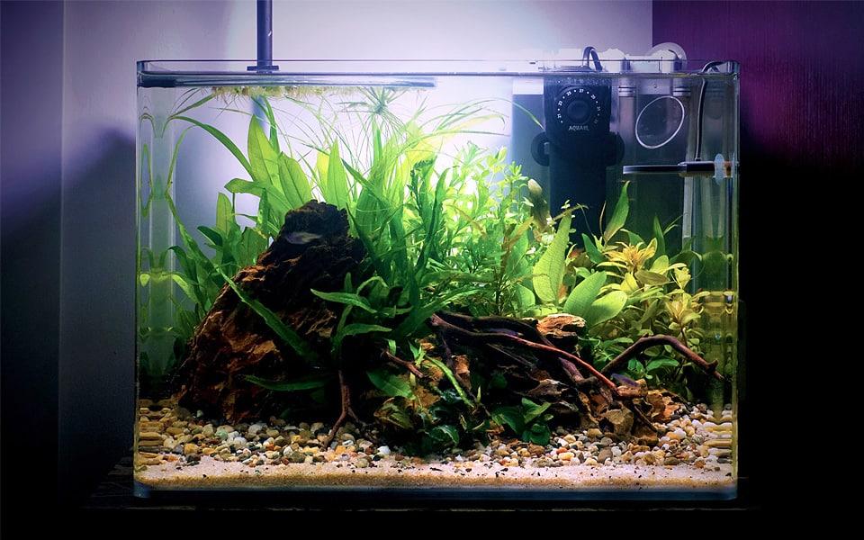 Acquario con piante in casa