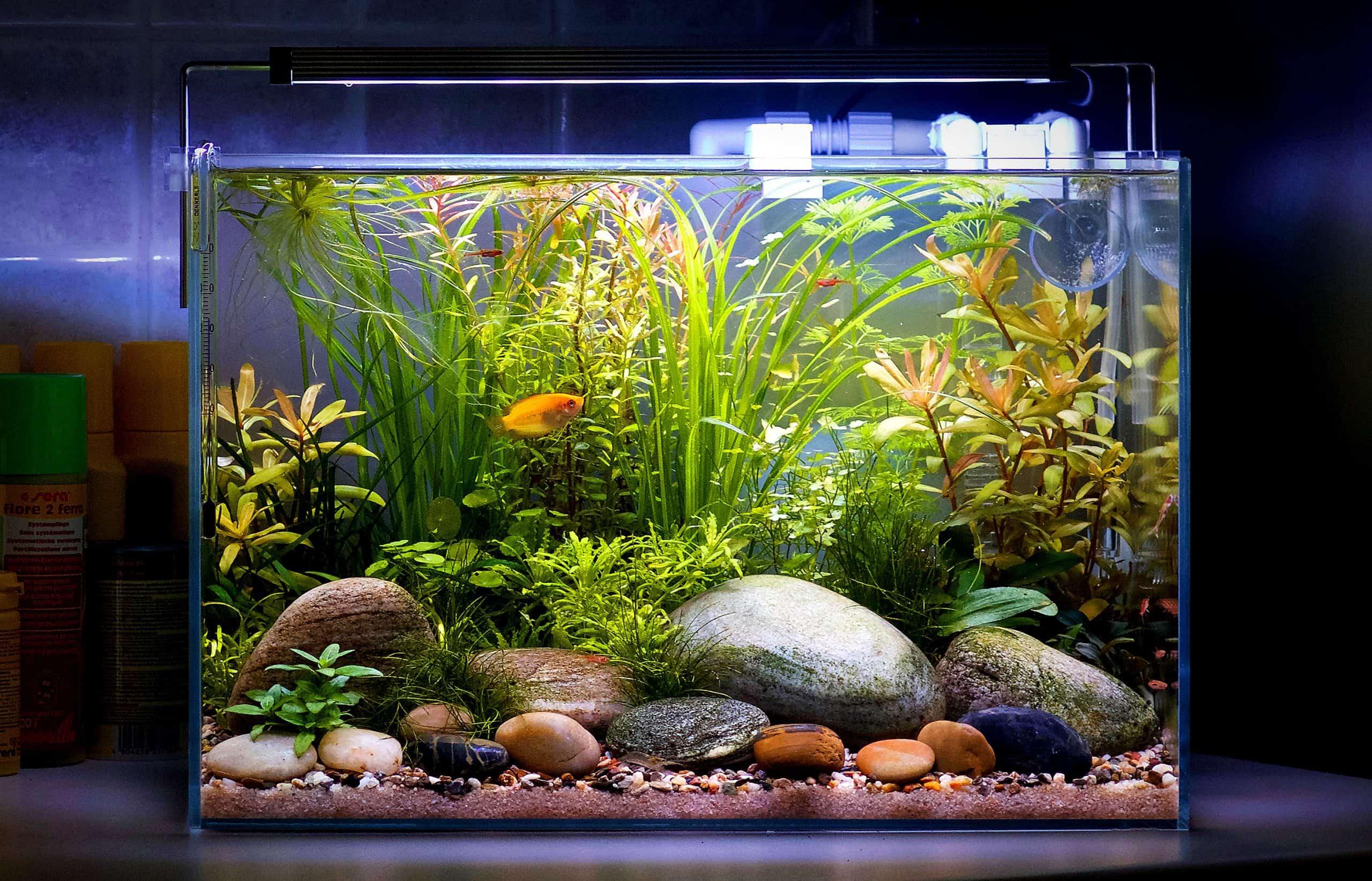 Acquario con piante