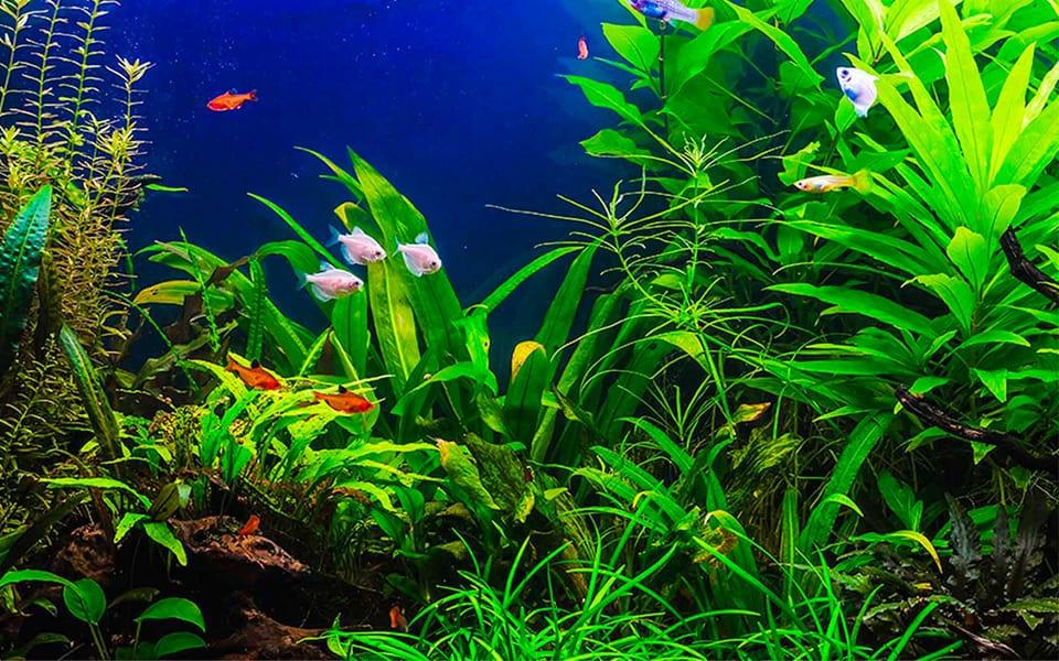 Fertilizzante per acquario completo