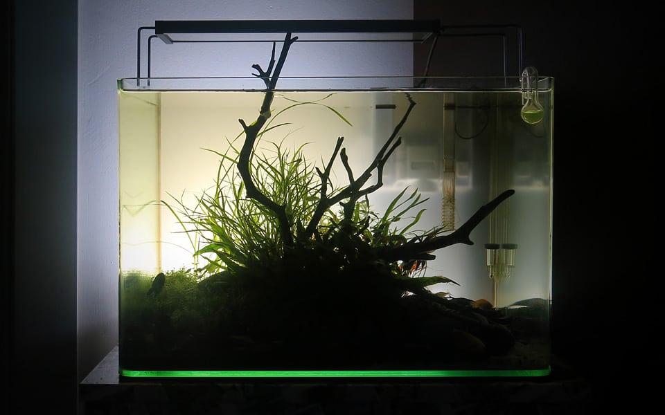 Illuminazione posteriore acquario