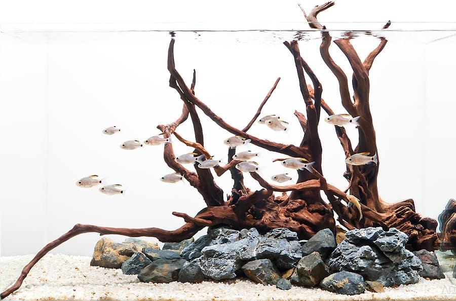 Legni per acquario