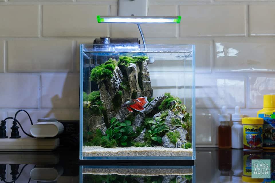 Nano acquario