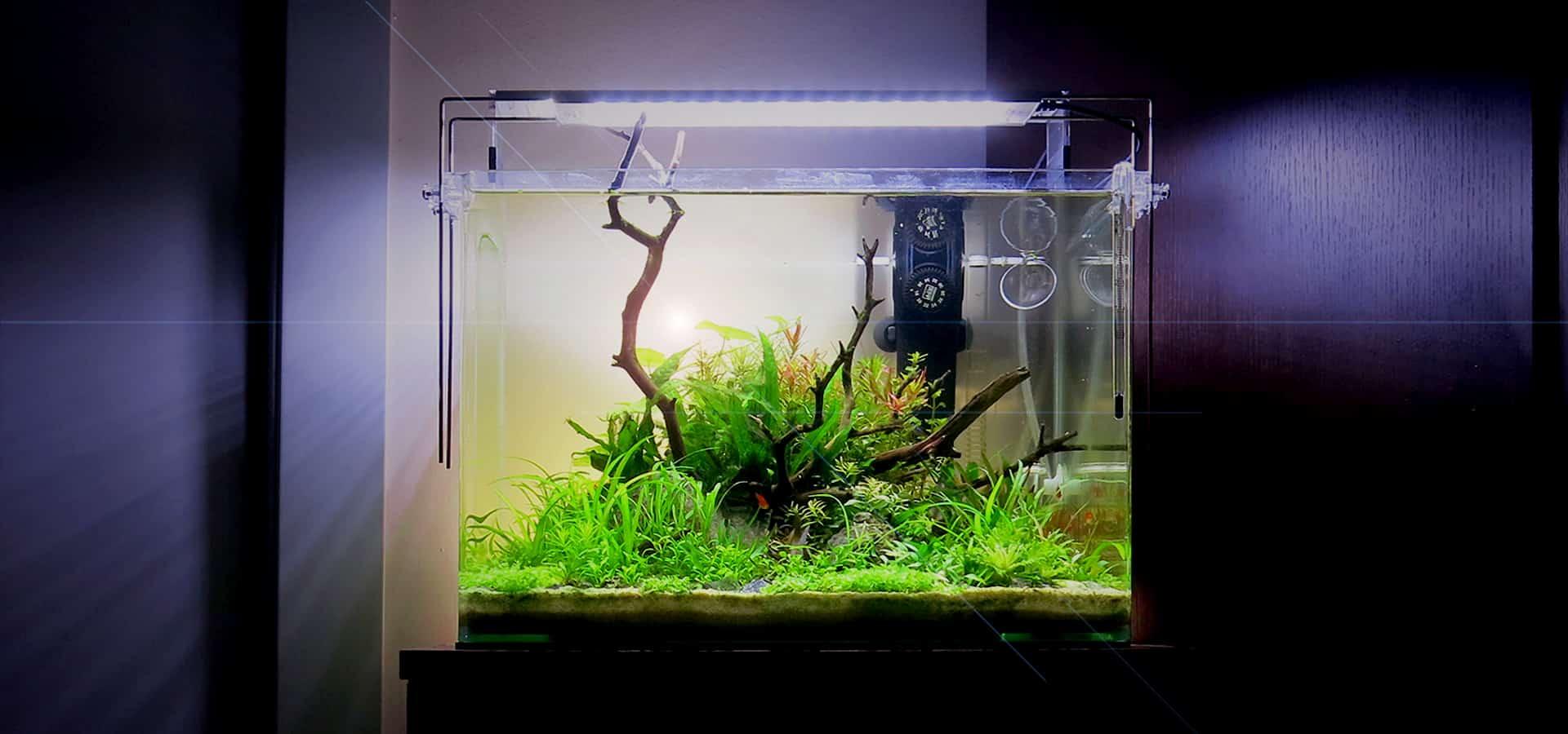 Piante per l'acquario naturale in casa
