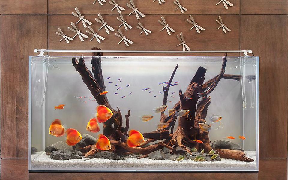 Sculture viventi in un acquario in casa