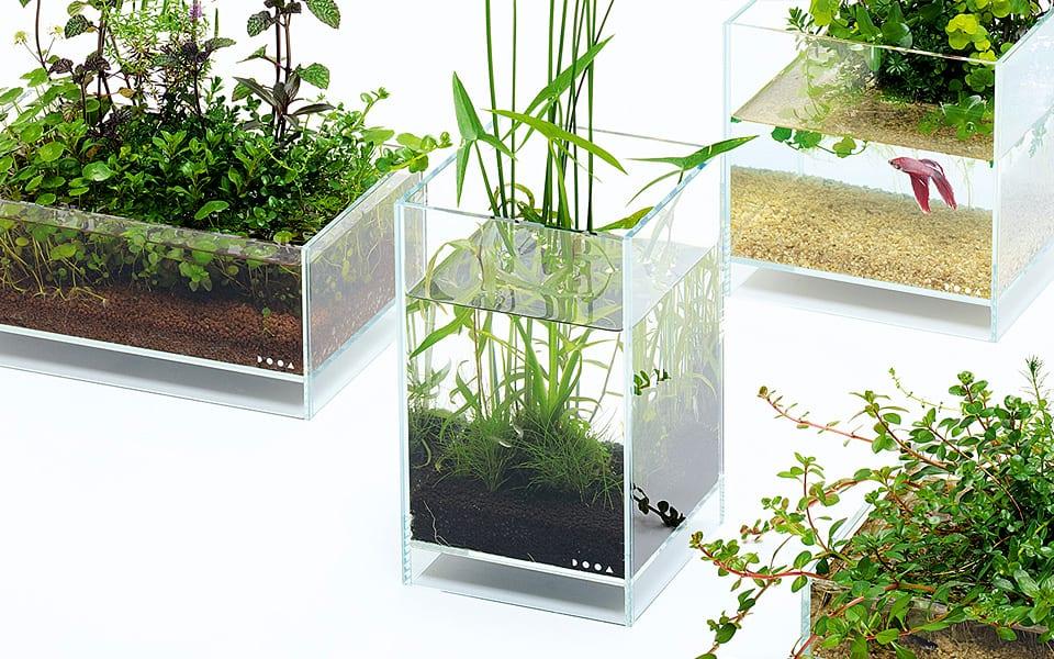 Acqua terrario o acquario naturale?