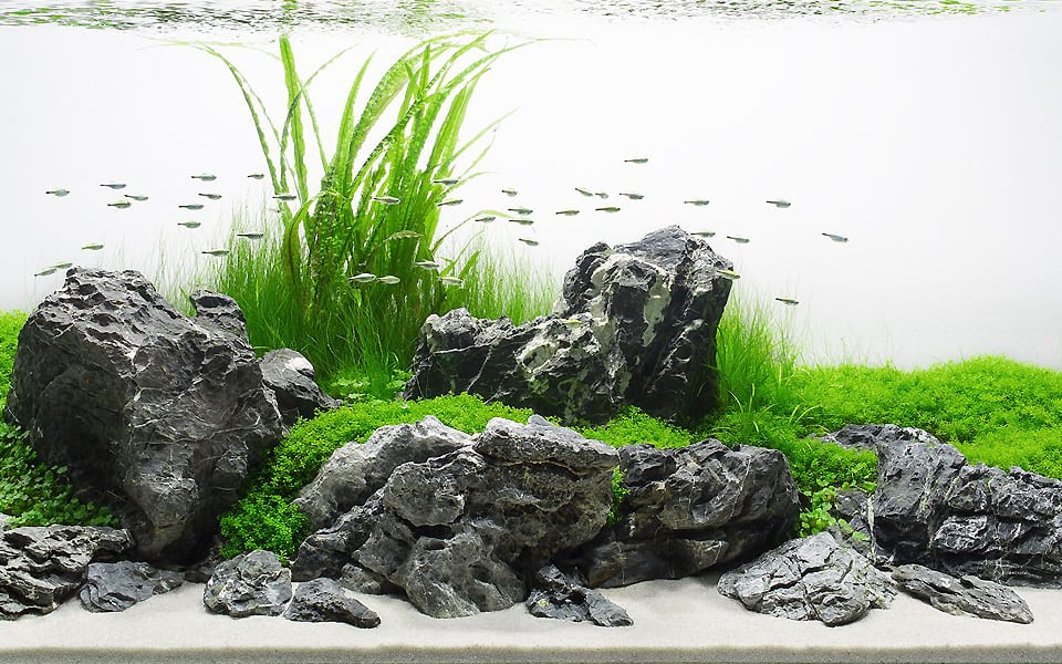 Acquario Iwagumi: aquascape in casa
