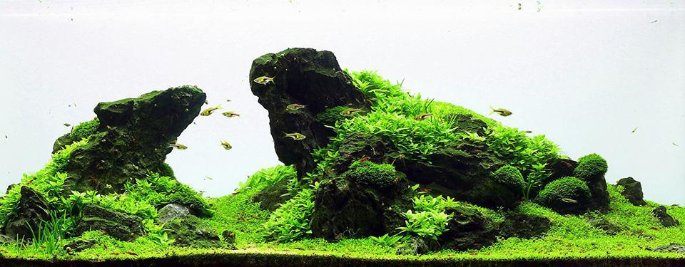 Acquario Iwagumi