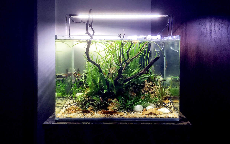 Acquario da 30 litri in stile aquascape