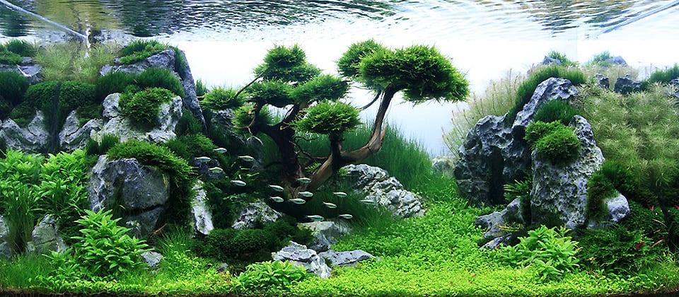 Acquario tropicale con piante di design