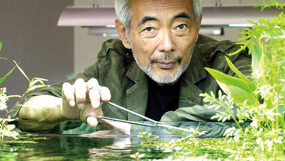 Come allestire un acquario giapponese