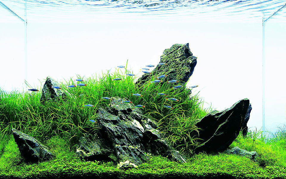 Iwagumi Aquarium Home Aquascape Aquarium In The House