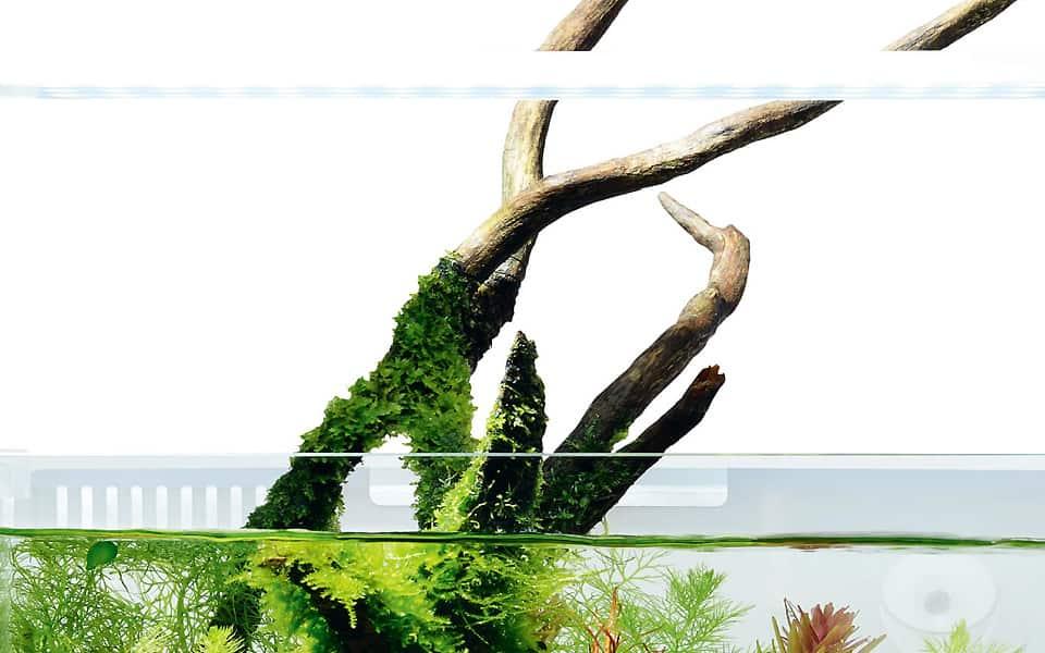 Piante in vetro e terracquari