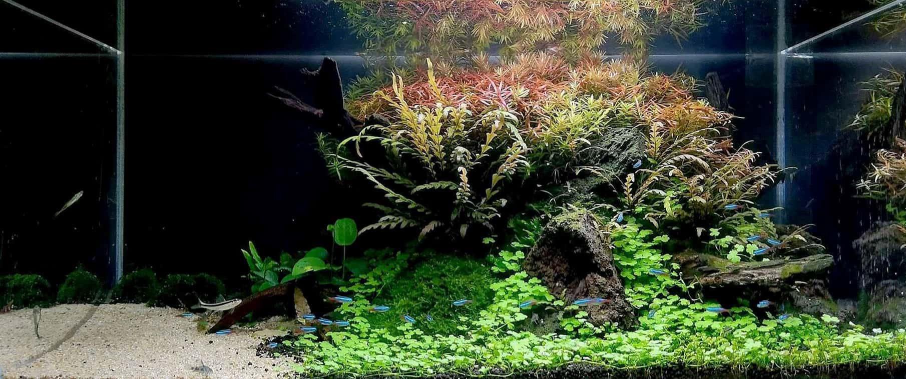 Acquario aquascape