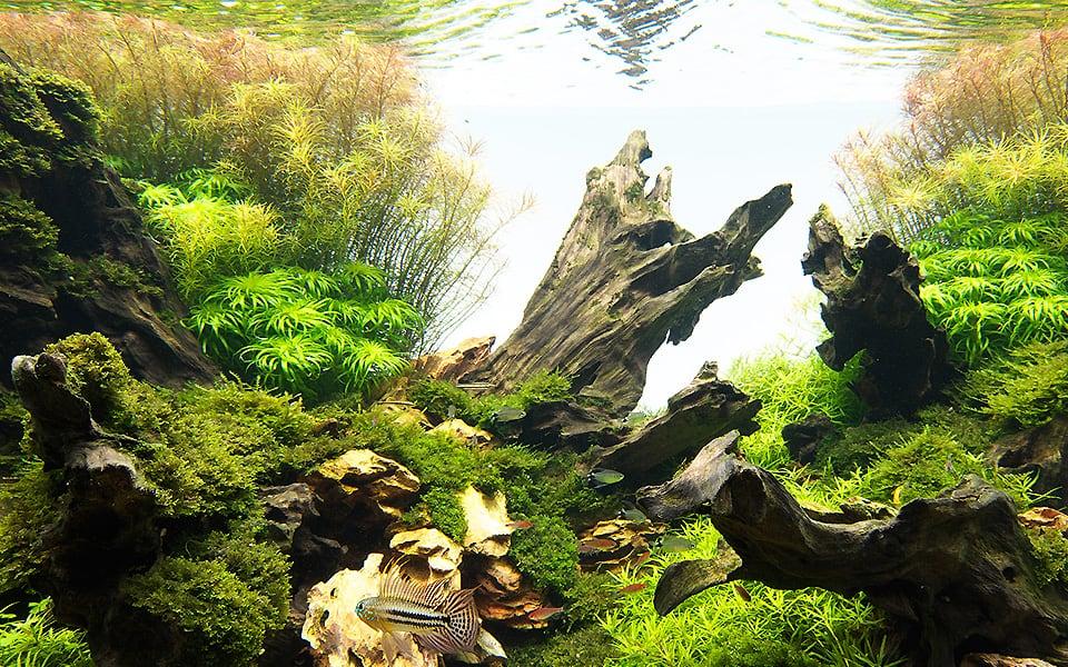 Acquario nuovo: natura in vetro