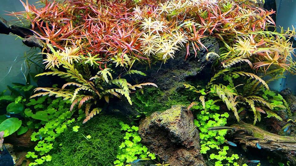 Aquario aquascape