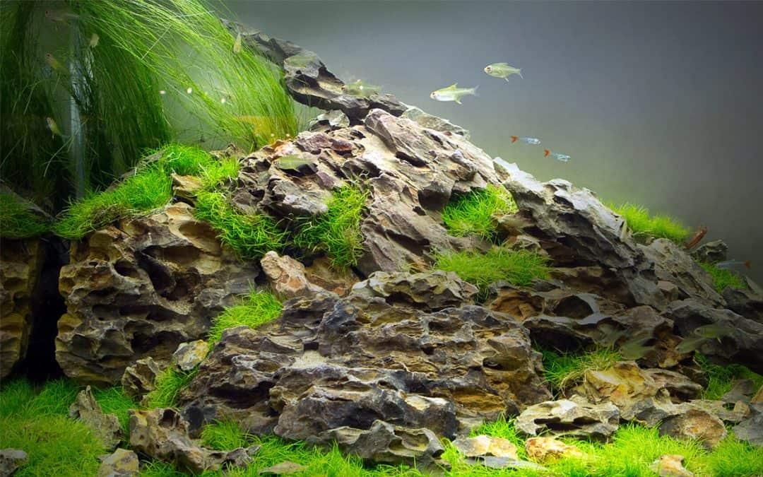 Dragon stone: le pietre del drago