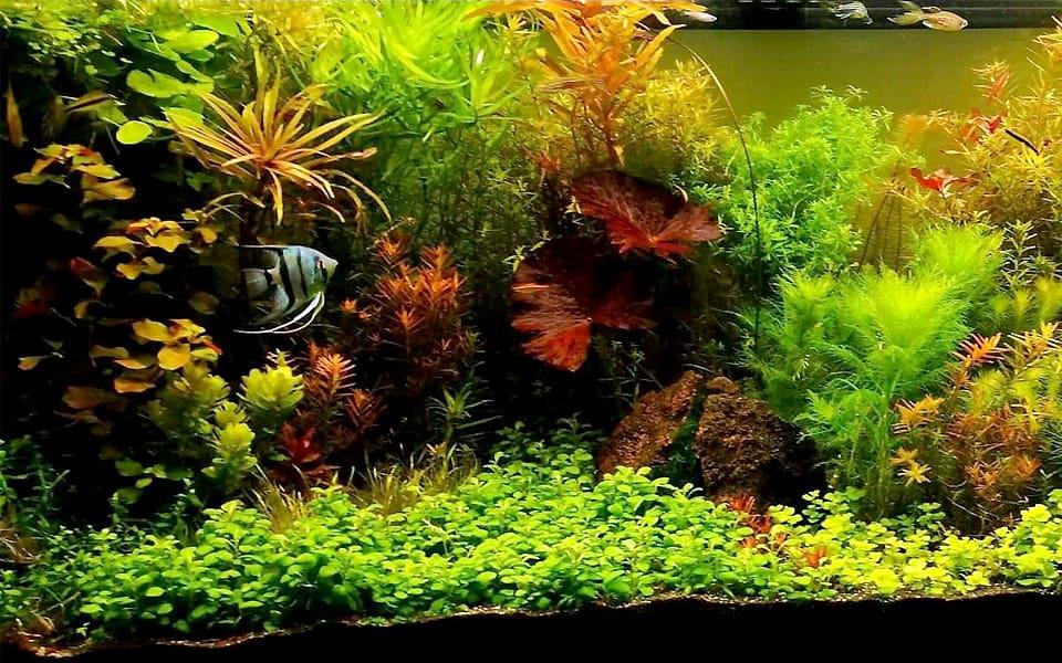 Gestione acquario naturale
