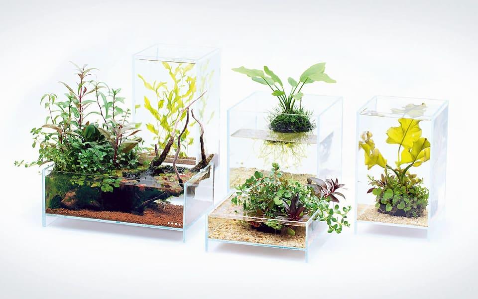 Piante acquatiche in vaso