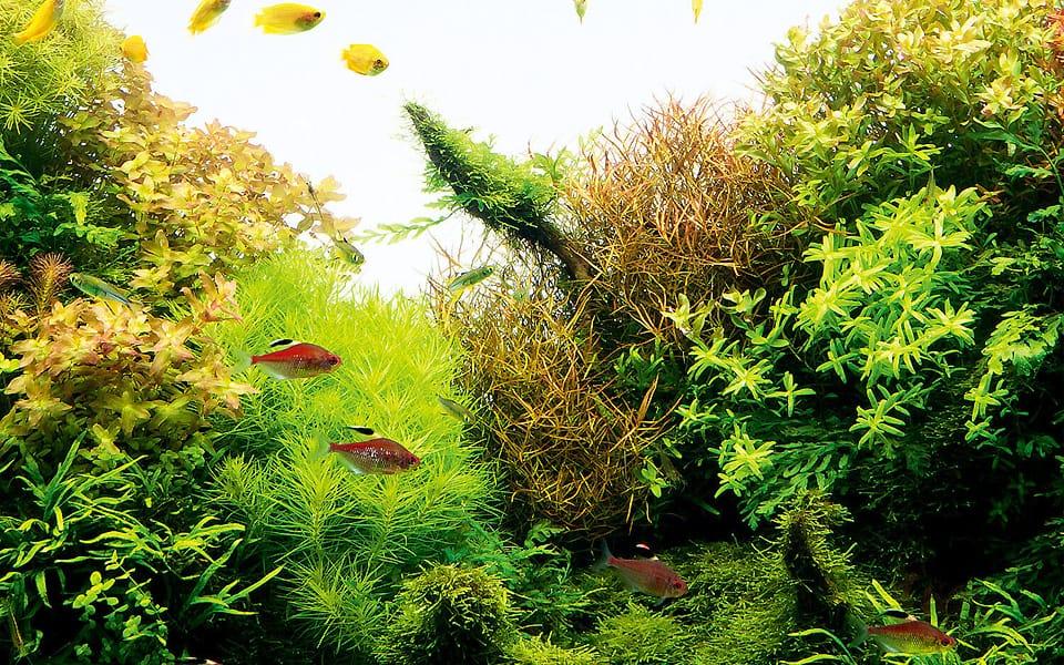 Piante per acquario: natura in casa