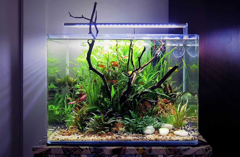 Quanto costa un acquario