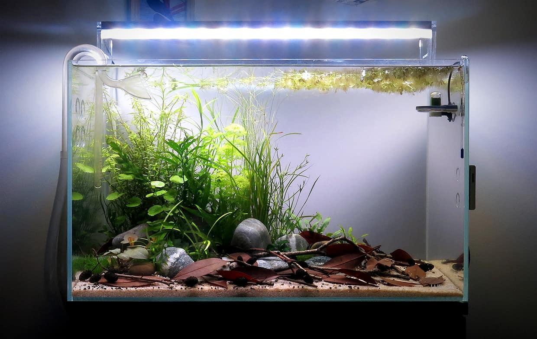 Acquario aperto di design