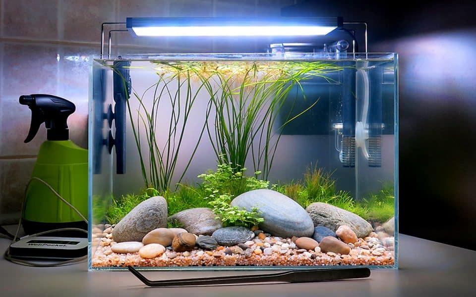 Acquario biotopo fiume