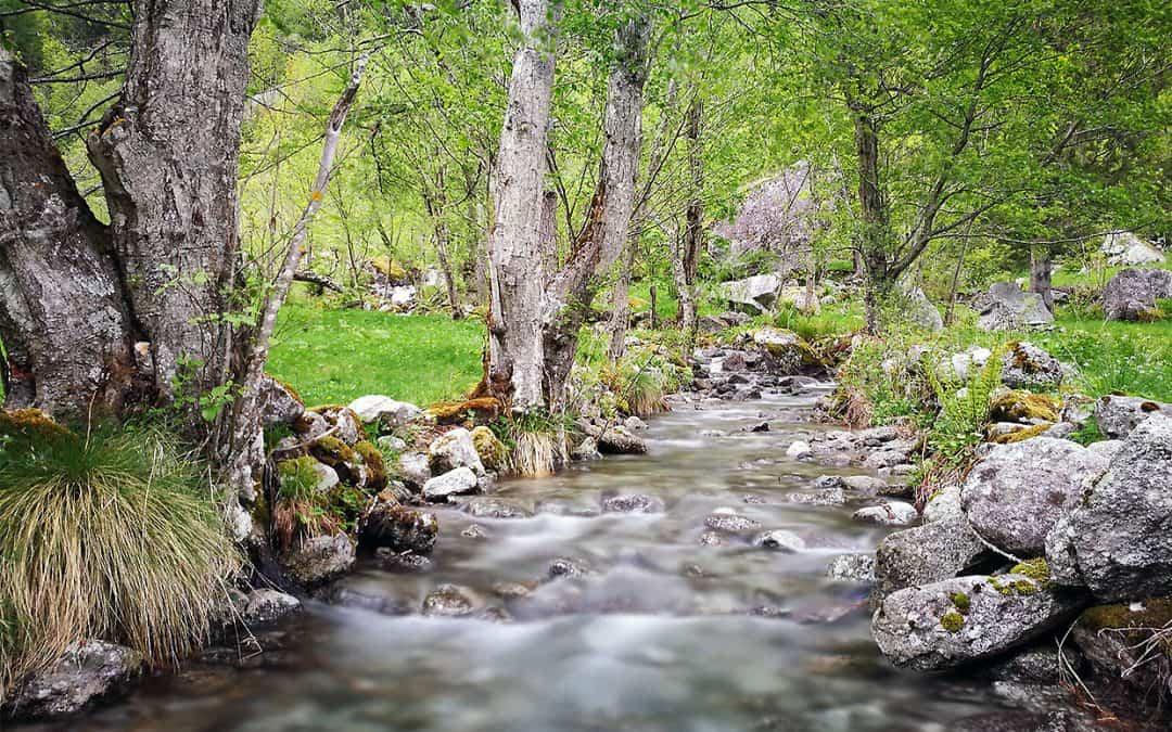 Acquario biotopo: il fiume