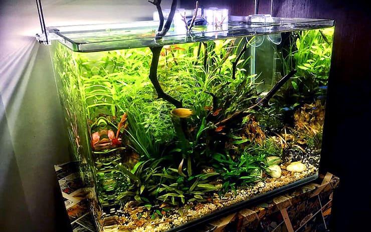 "Aquascape ""jungle"""