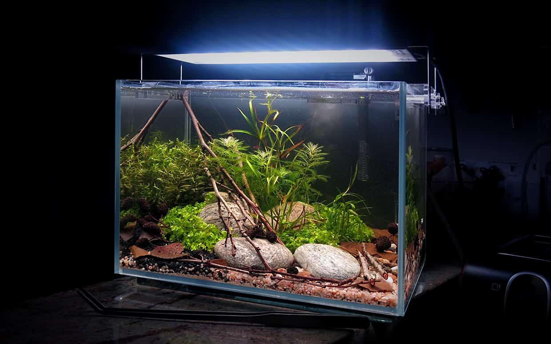 Acquario naturale in stile aquascape