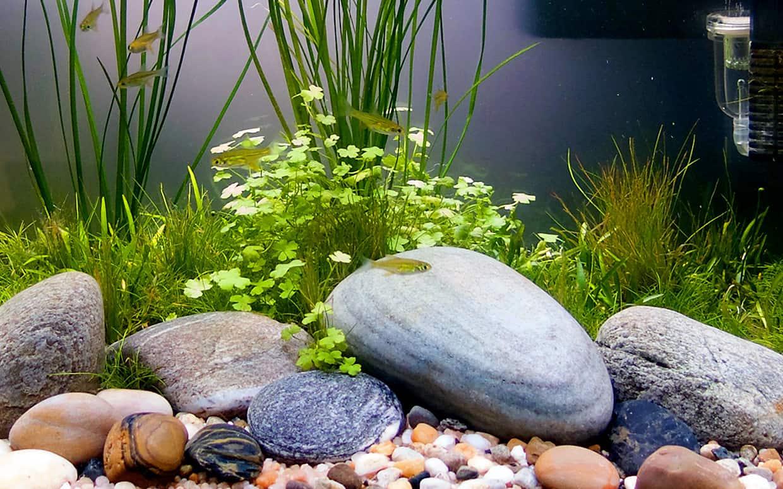 Piante acquario senza substrato