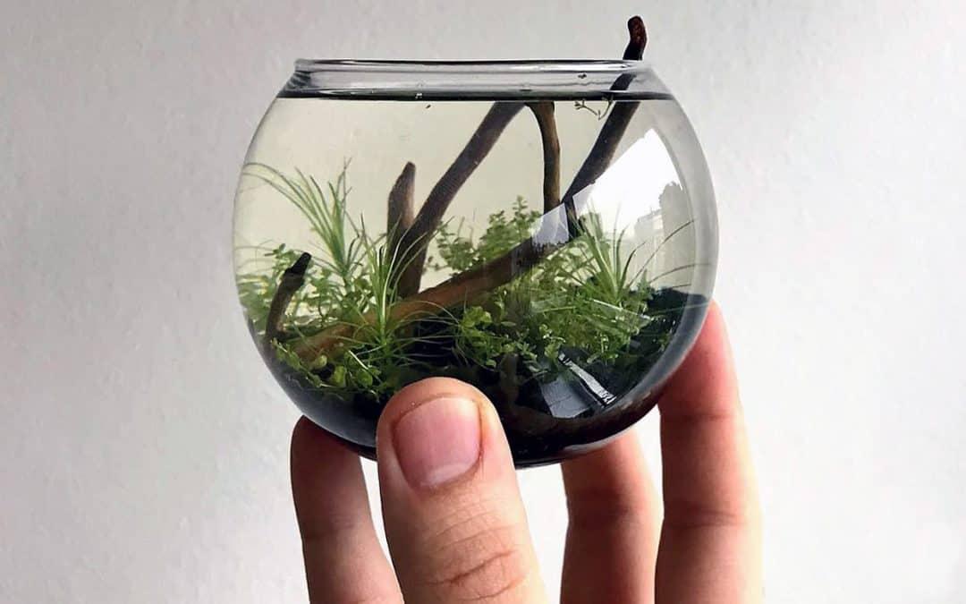Piante acquario facili in vasetto o in vitro