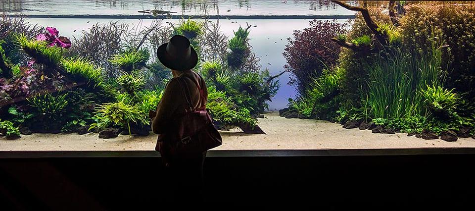 Takashi Amano acquari: Acquario naturale