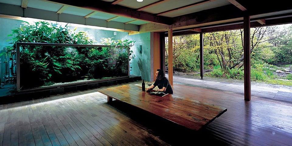 Takashi Amano acquari: Amano fotografia