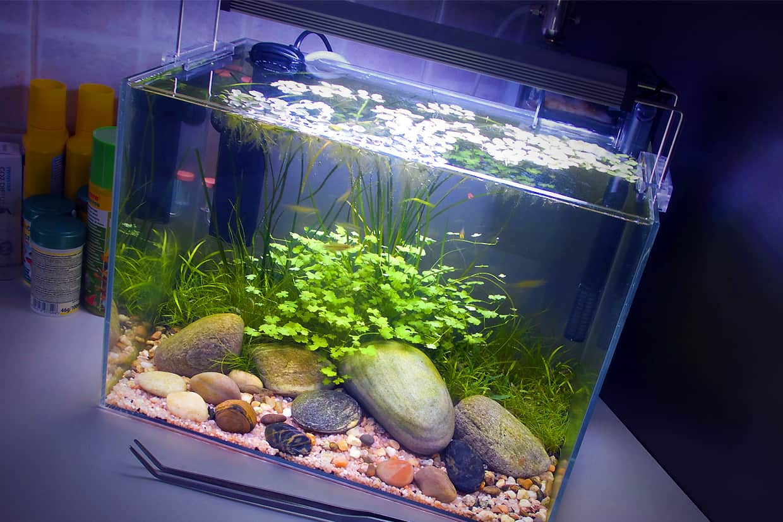 Come fare un acquario in casa
