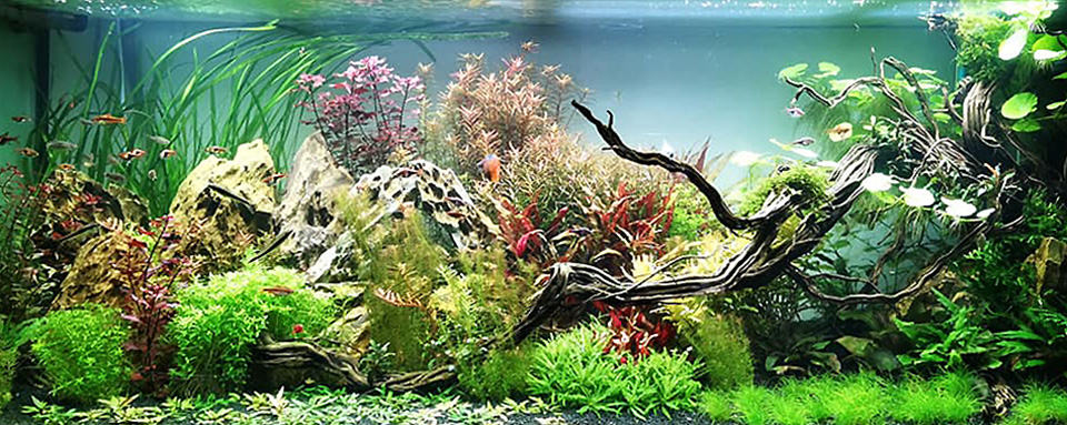 Vasca senza alghe