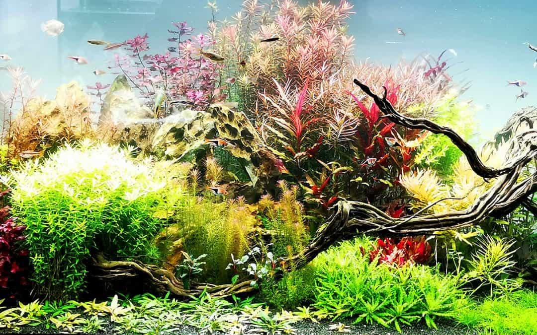 Acquario con piante vere