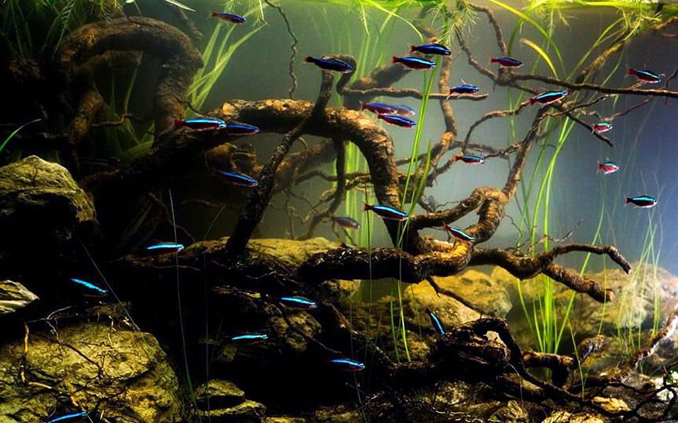 Biotopo amazzonico in acquario