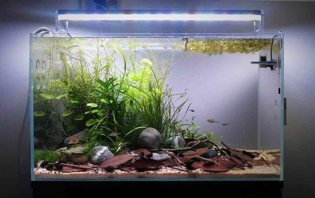 Come allestire un acquario naturale