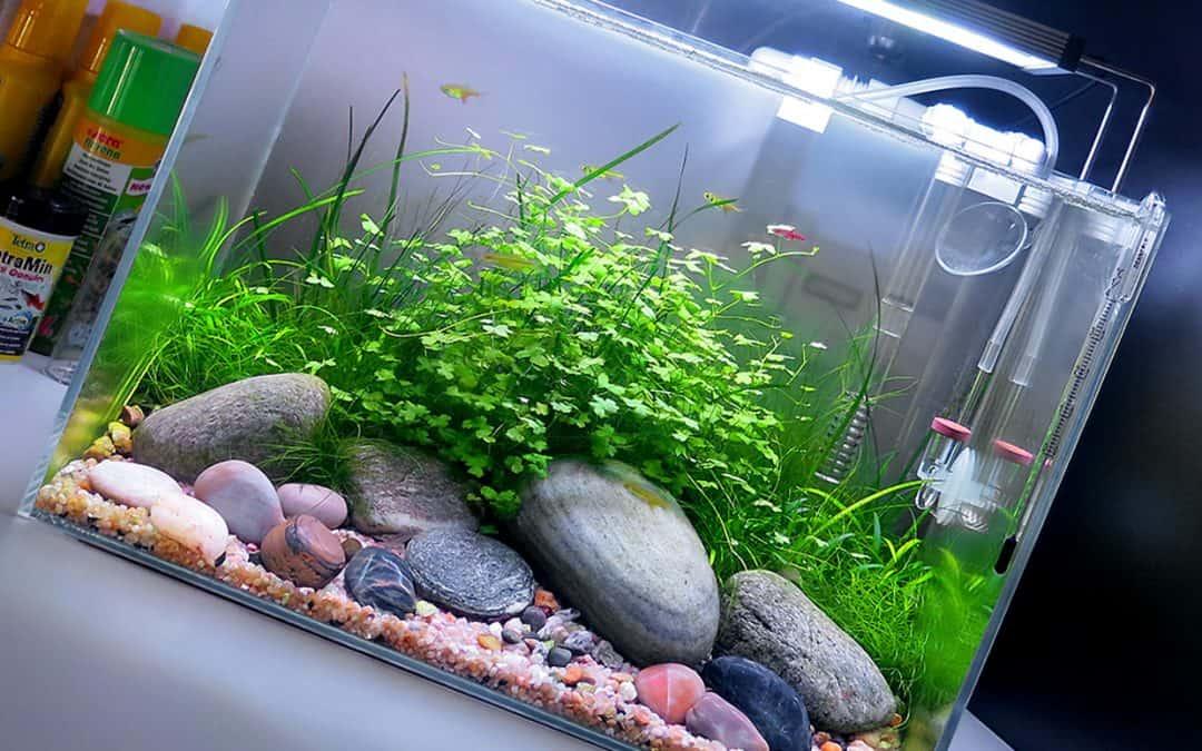 Fertilizzante acquario completo