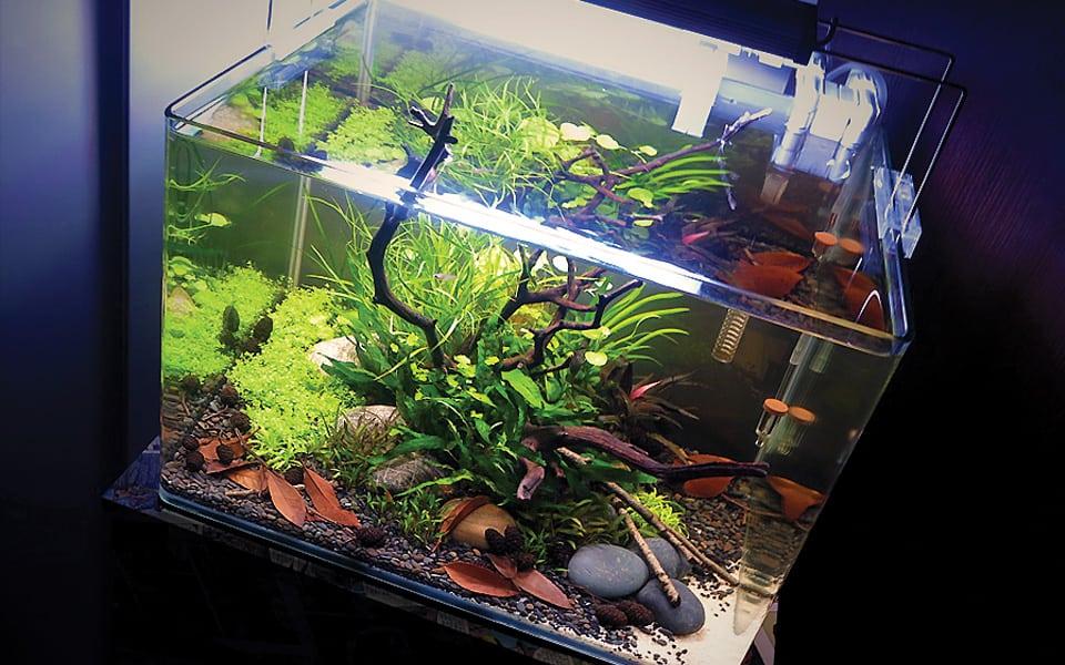 Pesci e acquario