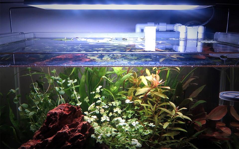 Piante a crescita rapida acquario