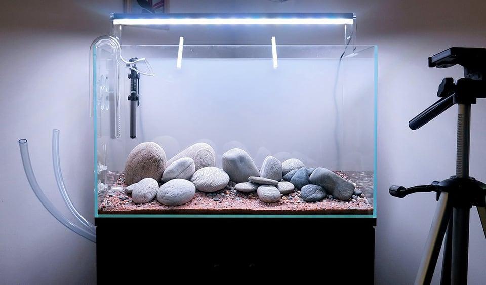 Allestire un acquario- guida pratica