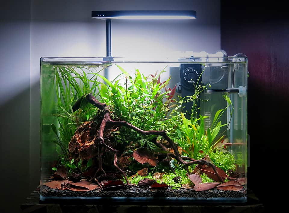 Natural aquascape aquarium
