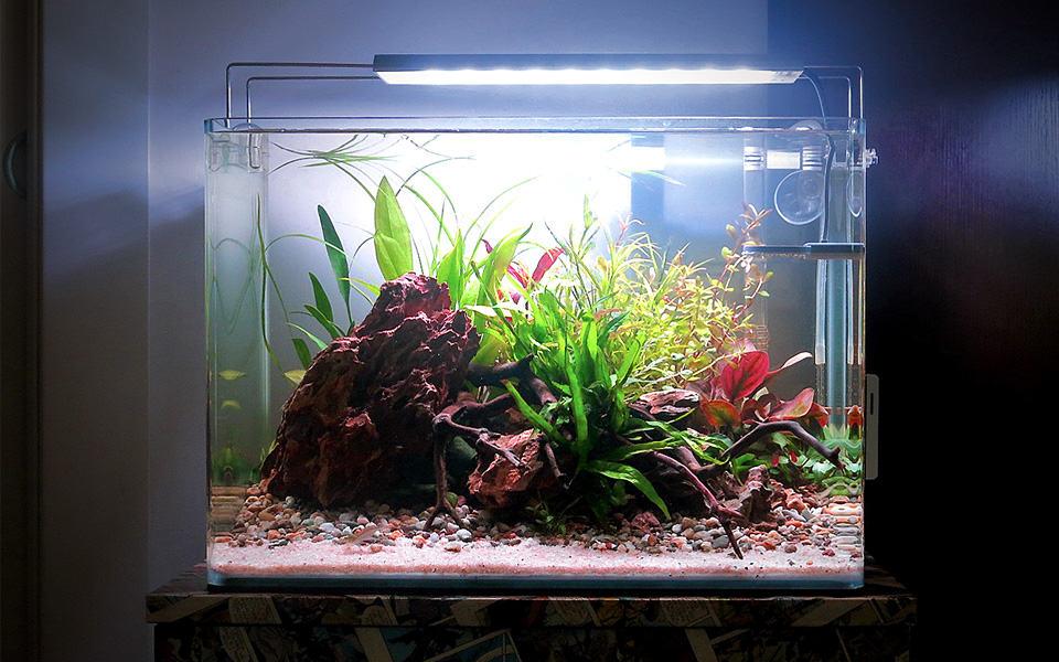 Acquario per pesci completo