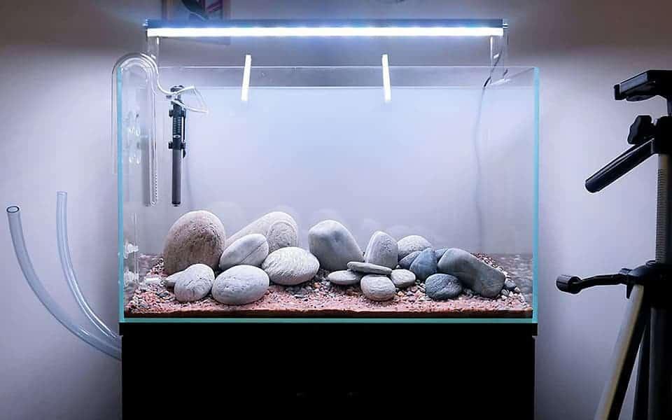 Acquario per pesci