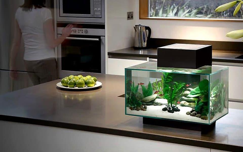 Acquariofilia online: Acquario in casa