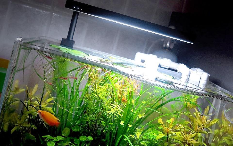 Luce Led per acquario nano
